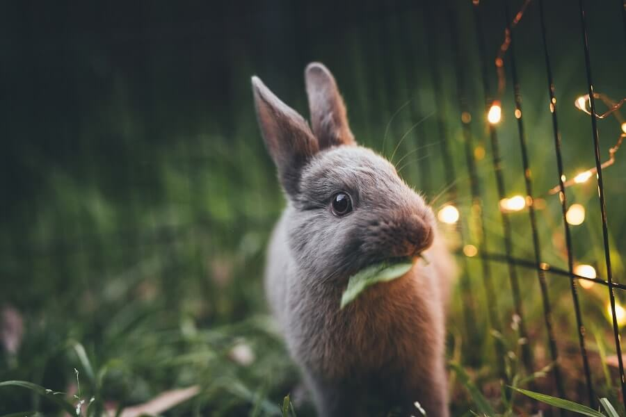A bunny eating a leaf