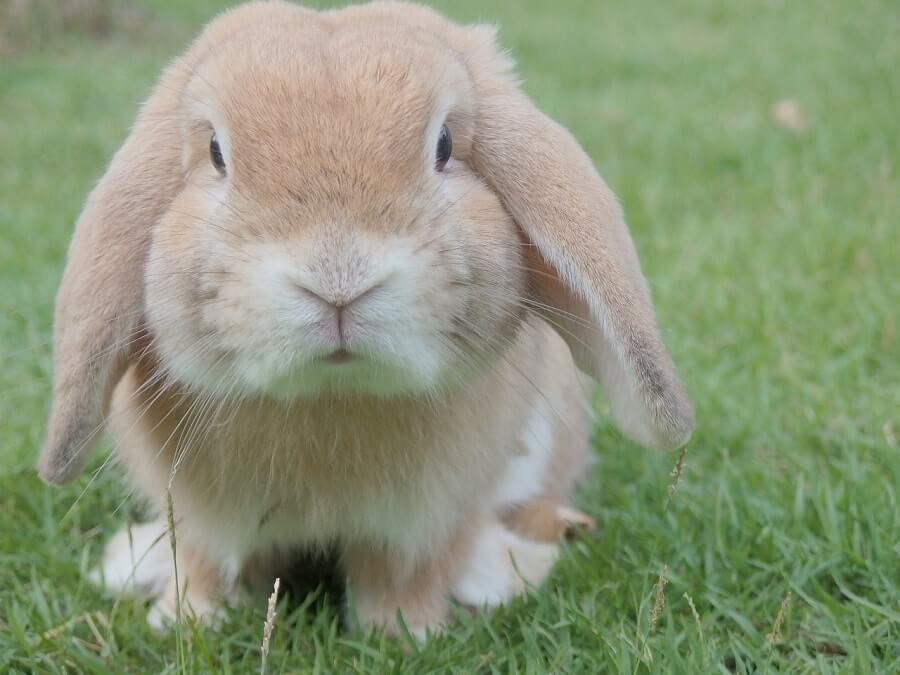 Bunny close up on grass