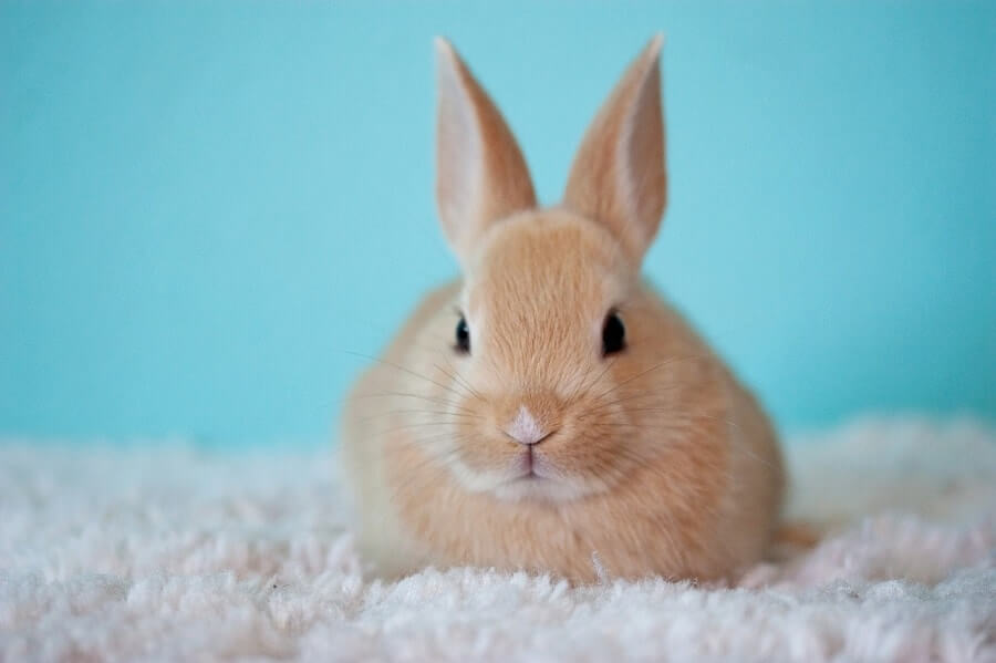Cute Bunny on carpet